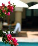 Bloemen in de zon stock afbeelding