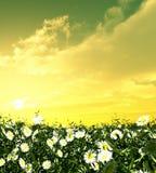 Bloemen in de zonsondergang stock foto's
