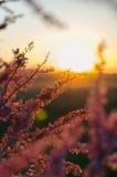 Bloemen in de zonsondergang Stock Afbeeldingen