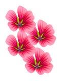 Bloemen decoratief met lilac bloemblaadjes Stock Foto