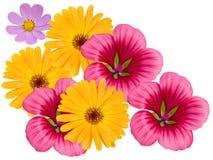 Bloemen decoratief op een witte achtergrond Stock Afbeeldingen