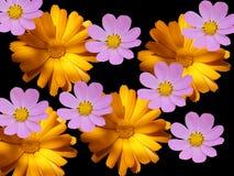 Bloemen decoratief op een zwarte achtergrond Royalty-vrije Stock Afbeelding
