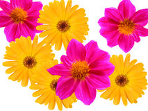 Bloemen decoratief van een tuin Stock Fotografie
