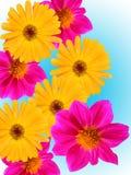 Bloemen decoratief van een tuin Stock Afbeelding