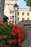 Bloemen die in de binnenbinnenplaats van Kasteeltoren groeien Het Verenigd Koninkrijk Londen stock afbeeldingen