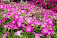 Bloemen die in de ochtend met vele kleurrijke groene bladeren bloeien royalty-vrije stock foto