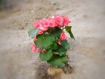 Bloemen die in de tuin bloeien royalty-vrije stock fotografie
