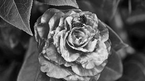 Bloemen die in een fijne kunststijl zijn ontsproten in een studio Stock Foto