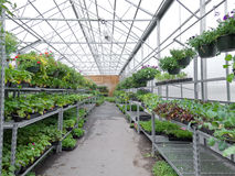 Bloemen die in foliebroeikas groeien van tuincentrum stock afbeelding