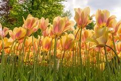 Bloemen die hoogte kweken Stock Afbeeldingen