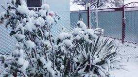 Bloemen die met sneeuw worden behandeld Stock Fotografie