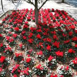 Bloemen die onder boom bloeien Stock Fotografie