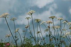 Bloemen die op de muur van blauw meer bloeien Royalty-vrije Stock Afbeeldingen
