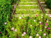 Bloemen die op de oude spoorweg groeien De aard slaat de industrie royalty-vrije stock fotografie