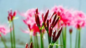 Bloemen die op de bloemen wachten om te bloeien stock foto's
