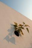 Bloemen die op een muur groeien royalty-vrije stock fotografie