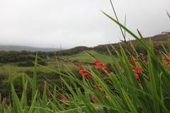 Bloemen die op het gebied groeien Stock Afbeelding