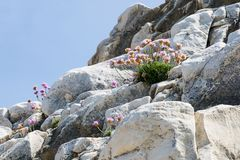 Bloemen die op rotsen groeien Stock Foto