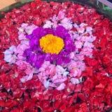 Bloemen die op water drijven Royalty-vrije Stock Afbeelding