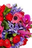 Bloemen die op witte achtergrond worden geïsoleerdT stock fotografie