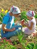 Bloemen die samen zaaien Stock Foto