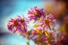 Bloemen die van nachtvorst bij vroege de winterochtend terugkrijgen stock afbeelding