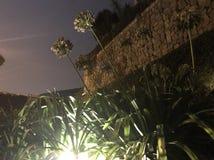 Bloemen die voor de hemel bereiken Stock Foto's