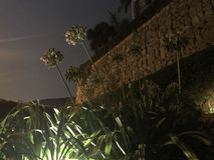 Bloemen die voor de hemel bereiken Stock Afbeeldingen
