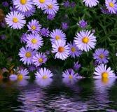 Bloemen die in water worden weerspiegeld Royalty-vrije Stock Fotografie