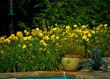 Bloemen door de pool Royalty-vrije Stock Afbeeldingen