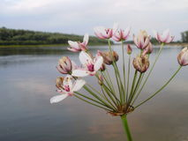 Bloemen door de rivier Stock Afbeeldingen