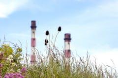 Bloemen door de Torens Stock Foto