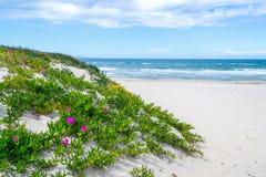 Bloemen door het overzees in Platamona royalty-vrije stock fotografie