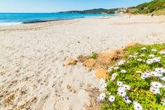 Bloemen door het overzees in het strand van Le Bombarde stock foto