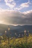 Bloemen door het zachte licht van zonsondergang worden verlicht - Verticaal die Stock Fotografie