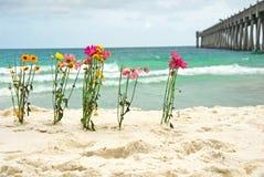 Bloemen door oceaan Royalty-vrije Stock Afbeeldingen