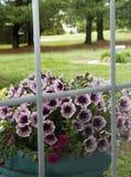 Bloemen door Venster Royalty-vrije Stock Afbeeldingen