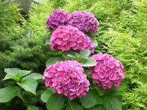 Bloemen in Duitsland Royalty-vrije Stock Foto