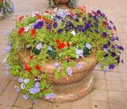 Bloemen in een bloembed Stock Afbeelding