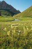 Bloemen in een Diepe Vallei in Kyrgyzstan Royalty-vrije Stock Fotografie