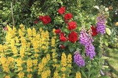 Bloemen in een Engelse Tuin van het Land Stock Foto's