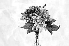 Bloemen in een fles Stock Fotografie