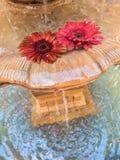 Bloemen in een fontein Stock Foto's