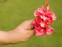 Bloemen in een hand Royalty-vrije Stock Foto