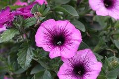 Bloemen in een kinderdagverblijf Stock Foto