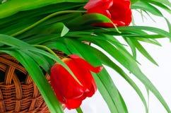 Bloemen in een mand Stock Afbeelding