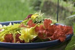 Bloemen in een mand Stock Afbeeldingen