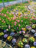 Bloemen in een park stock foto's