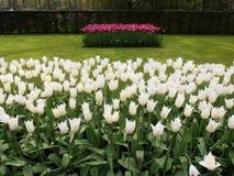 Bloemen in een park Royalty-vrije Stock Foto's