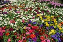 Bloemen in een park in Istanboel, Turkije Stock Fotografie